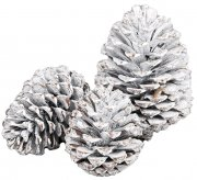 Large pine cones for decoration